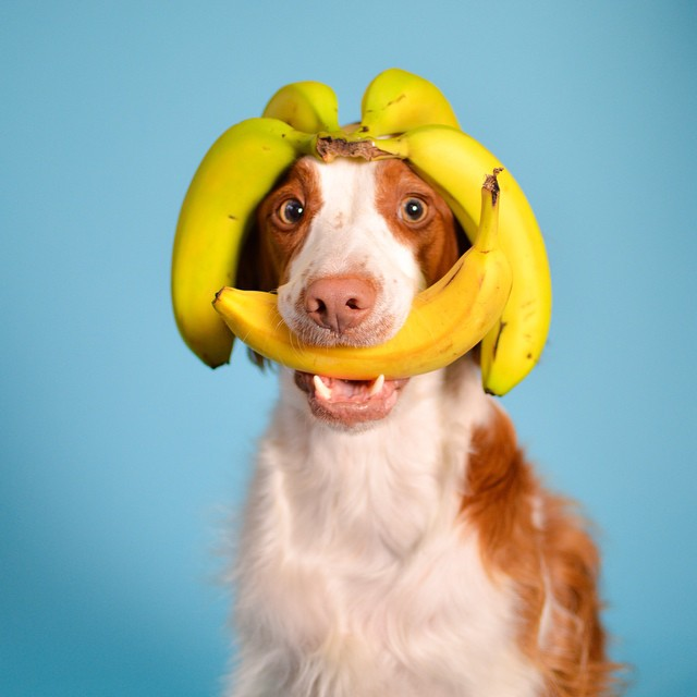 Are Bananas Good For Dogs