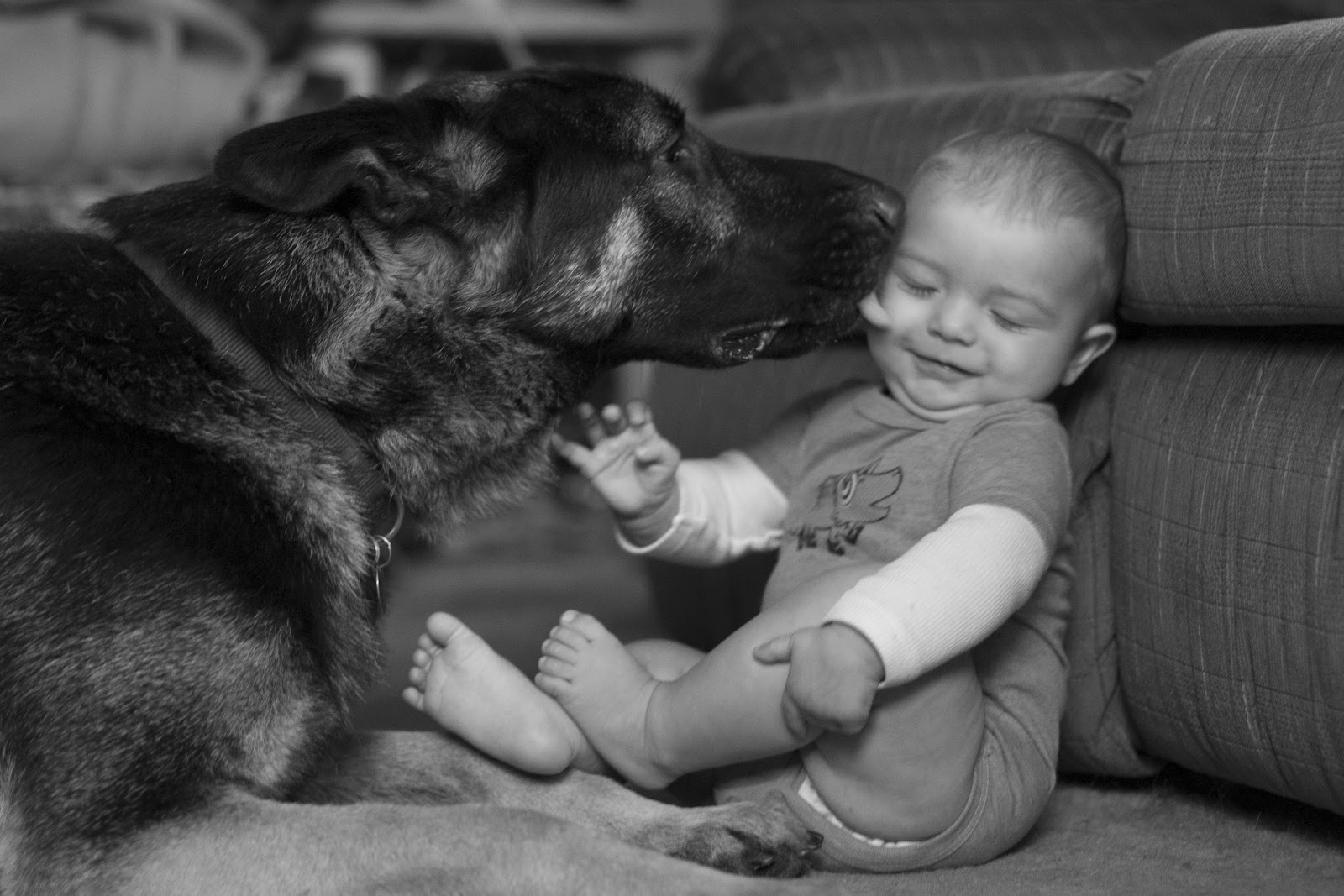 Join. was german shepherd and kids reply)))