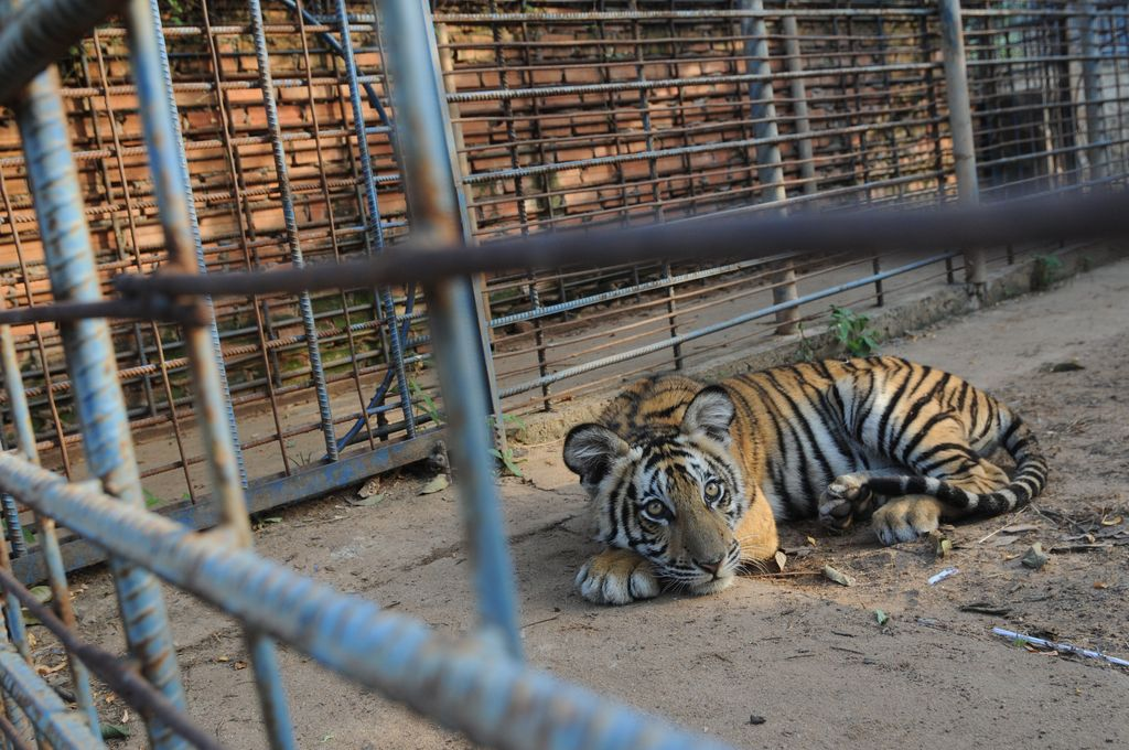 Should animal be kept in zoo essay