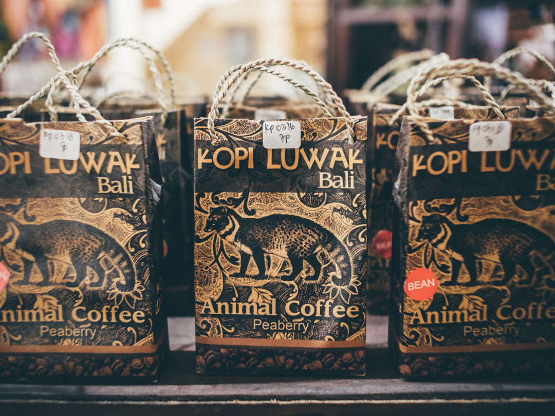 These Tiny Creatures Are Being Tortured To Produce The Worlds Most Morgan Coffee Kopi A Pack Of Luwak Indonesia