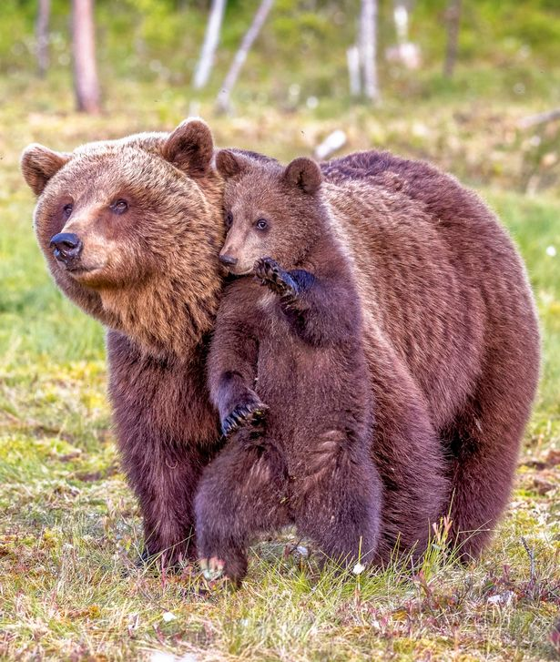 maman-ours-11
