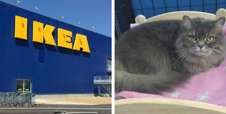 ikea offre d adorables lits pour les chats des refuges les internautes fondent. Black Bedroom Furniture Sets. Home Design Ideas