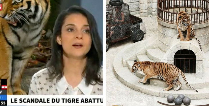 Fort Boyard : L'association PETA entend stopper l'apparition des tigres