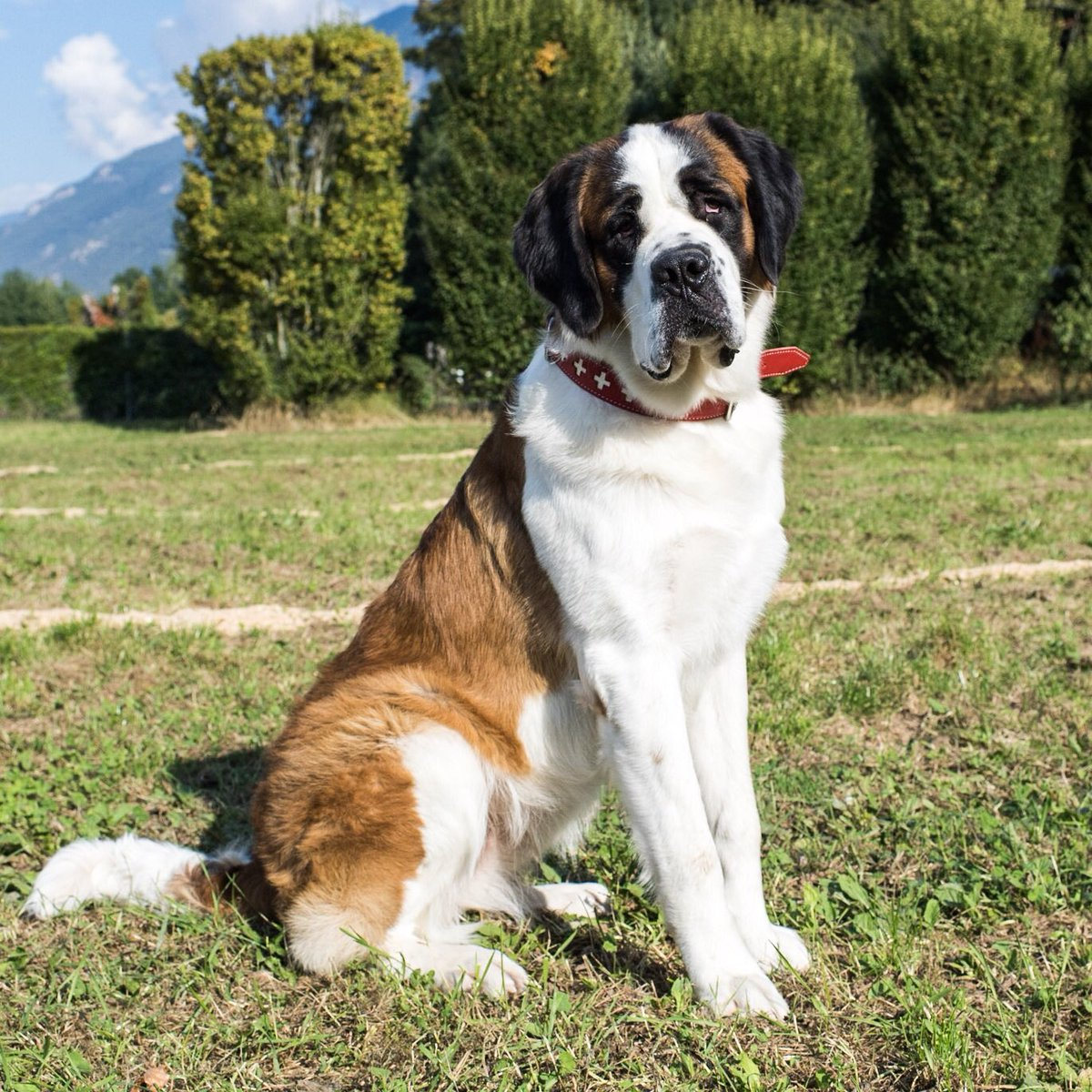 Dog Breeds: Which Dogs Like Cold Weather?