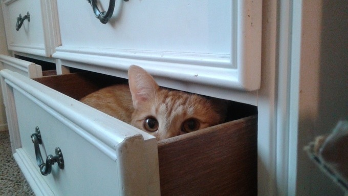 cat-hide-seek-11