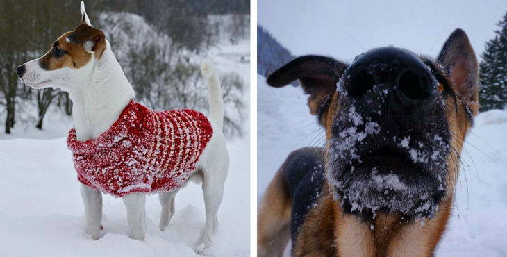 dog_tips_winter_cover
