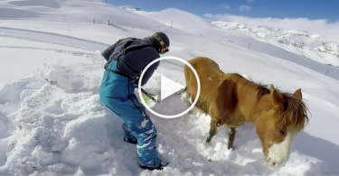 snowboarder-horse-cover