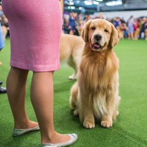 dogs-attention-lifestyle-5