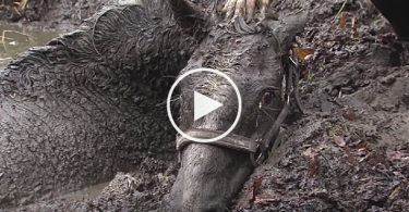 horse-stuck-mud-cover