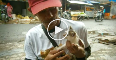 indonesia_stray_cat_rescue_cover