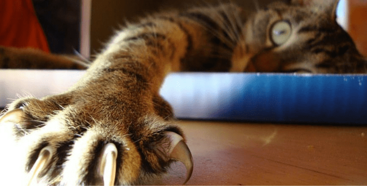 Why You Should Never Cut Cat's Claws, What To Do Instead