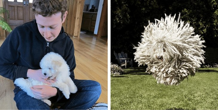 Mark Zuckerberg Celebrates 5 Yrs Of Friendship With Beast
