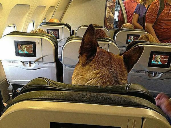 5 essential tips for travelling with your pup for Traveling on a plane with a dog