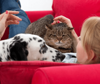 Rencontre entre 2 chats adultes