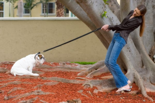 How To Get My Dog To Walk On A Leash