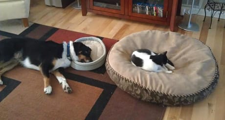 funny-dog-cat-big-bed-jerk - Holidog Times EN