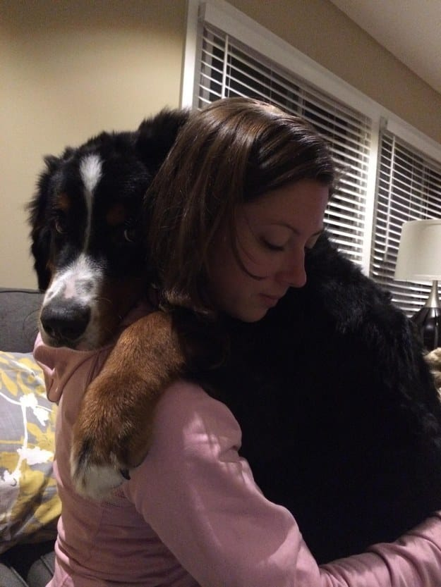 What Breed Of Dog Is Best At Comforting