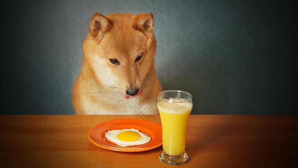 Can A Dog Eat Cooked Eggs