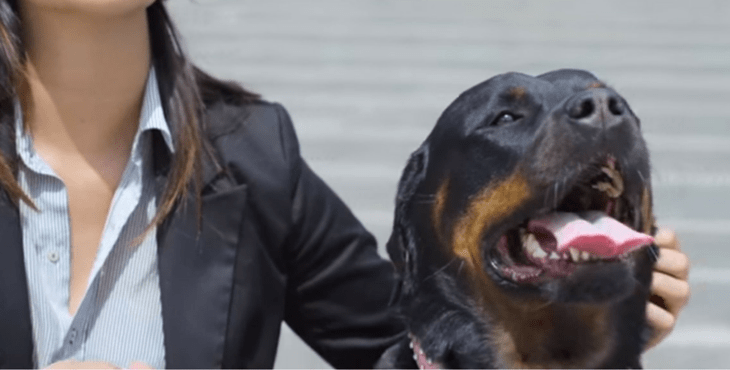 Breeding And Selling Dogs