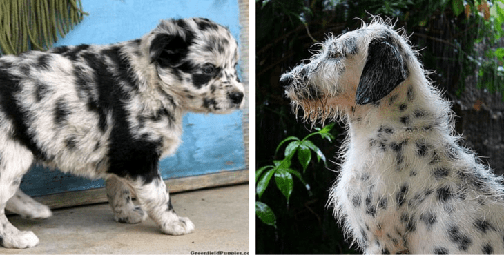 15 Super Spotty Dalmatian Cross Breeds