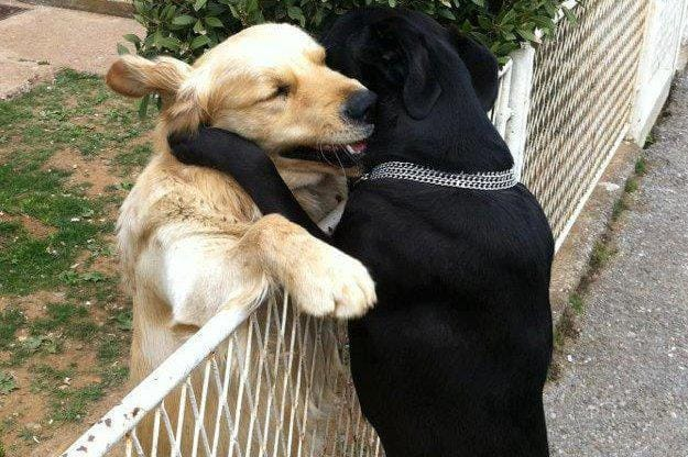 Image result for dogs hugs