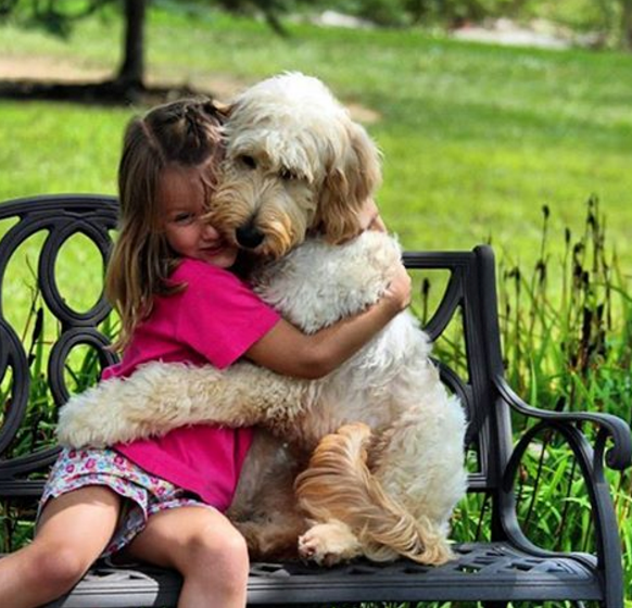 21 Photos Of Dogs Hugging Will Make You Feel All Fuzzy Inside