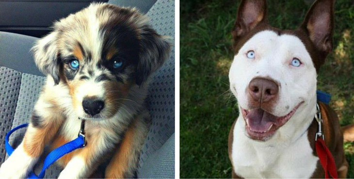 20 Of The Coolest Craziest Cross Breed Dogs Youll Ever See