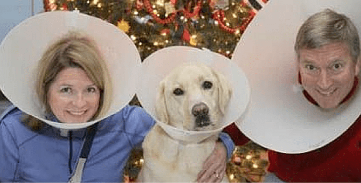 17 of the best awkward family dog photos of all time