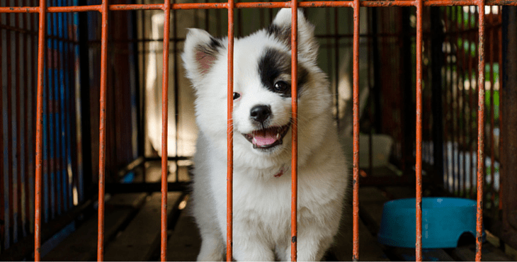 pet stores that sell puppies famous u s city now legally requires pet stores to only 3397