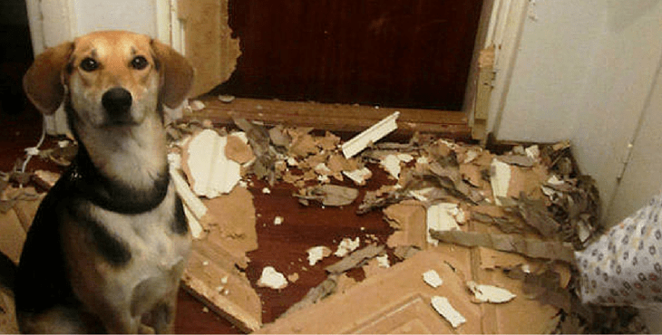 12 Naughty Dogs Who Have Been Caught Red Handed