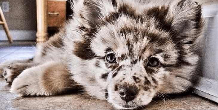 Craziest Dog Breeds