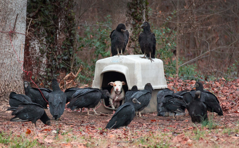 dog-vultures-rescue-1