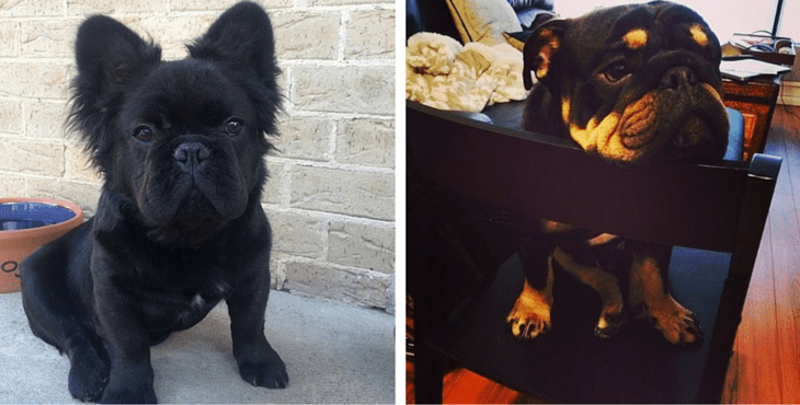 20 Of The Coolest Craziest Cross Breed Dogs You Ll Ever See