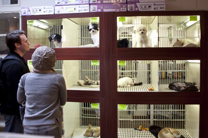 famous u s city now legally requires pet stores to only