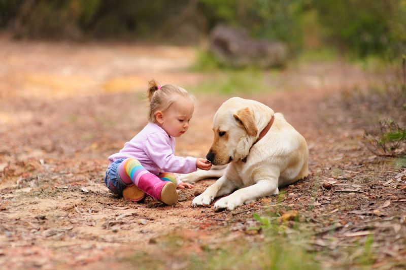 Most Child Friendly Dogs