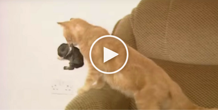 Meet Snaggle Puss The Mother Cat Who Adopted A Baby Bunny