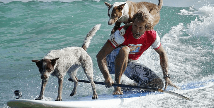 this dog trainer goes around australia teaching dogs how to surf