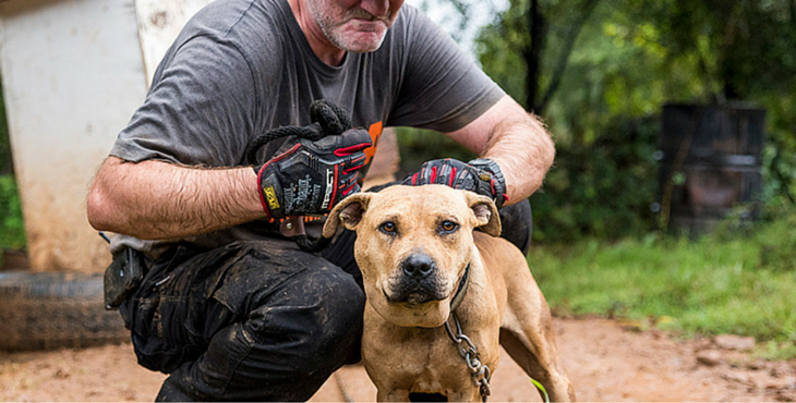 VICTORY: Dog Fighters Are Now Facing Longer Jail Sentences In The U S