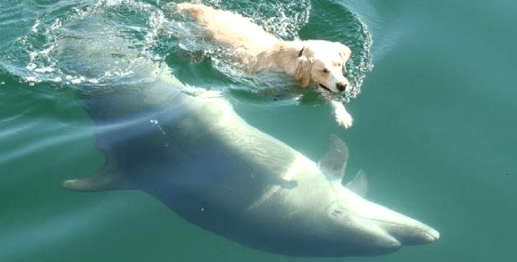 Image result for THIS DOLPHIN COMES TO SHORE DAILY, TO TAKE HIS CANINE FRIEND FOR A SWIM
