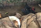 dog-meat-nagaland-cover