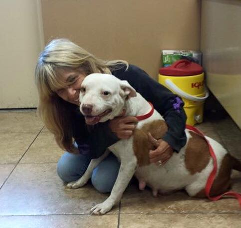 Pregnant Pit Bull Gives Birth, Free For The First Time ...