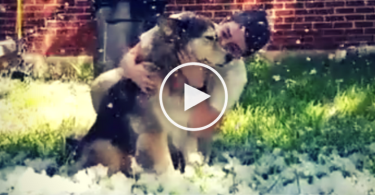 dog-snow-cover