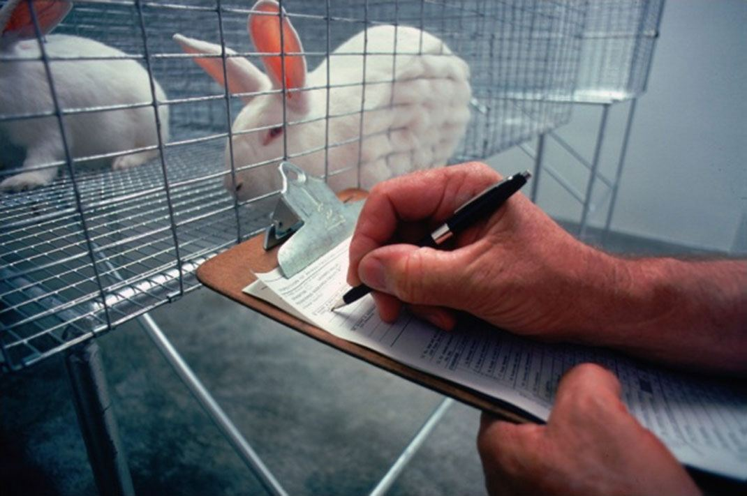 animal experiments to develop new types