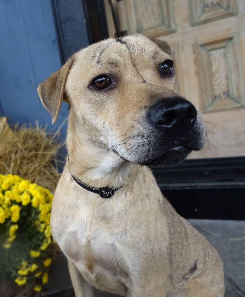 dog-lucy-rescued-shelter-1