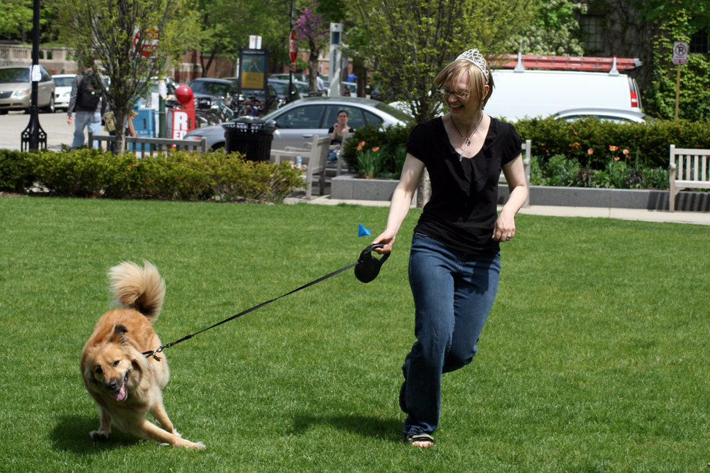 Toy Dog With Leash That Walks