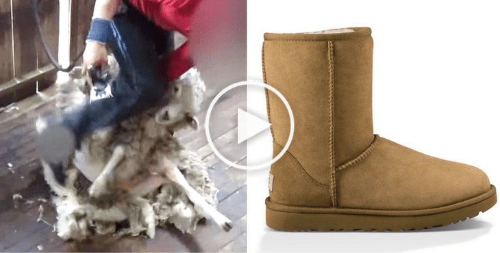 The Ugly Truth Behind UGG Boots - Investigation Shows Sheep Brutalized For Their Wool