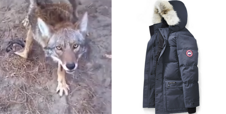 canada goose use real fur
