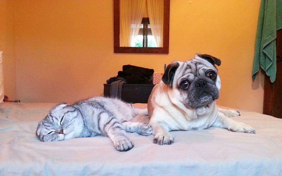dogs-and-cats-lifestyle-5