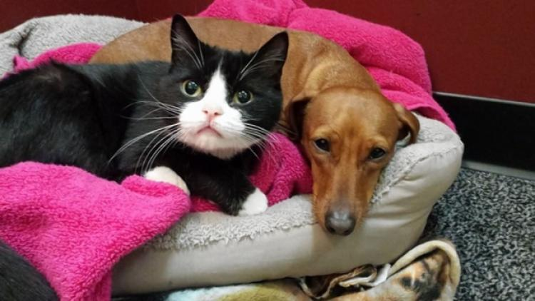 dogs-cats-lifestyle-1