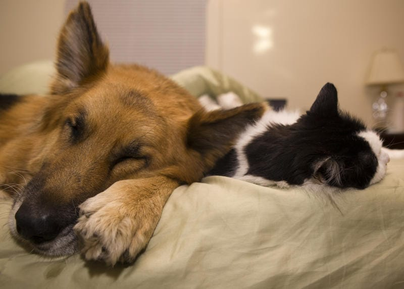 dogs-cats-lifestyle-2
